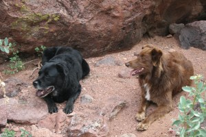 Two dogs sitting in nature